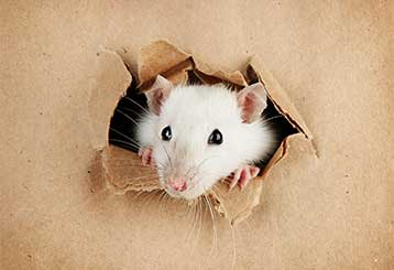 Rodent Proofing | Attic Cleaning Fremont, CA