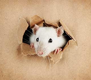 Rodent Proof Insulation | Attic Cleaning Fremont, CA