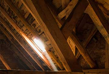 Attic Insulation Removal | Attic Cleaning Fremont, CA